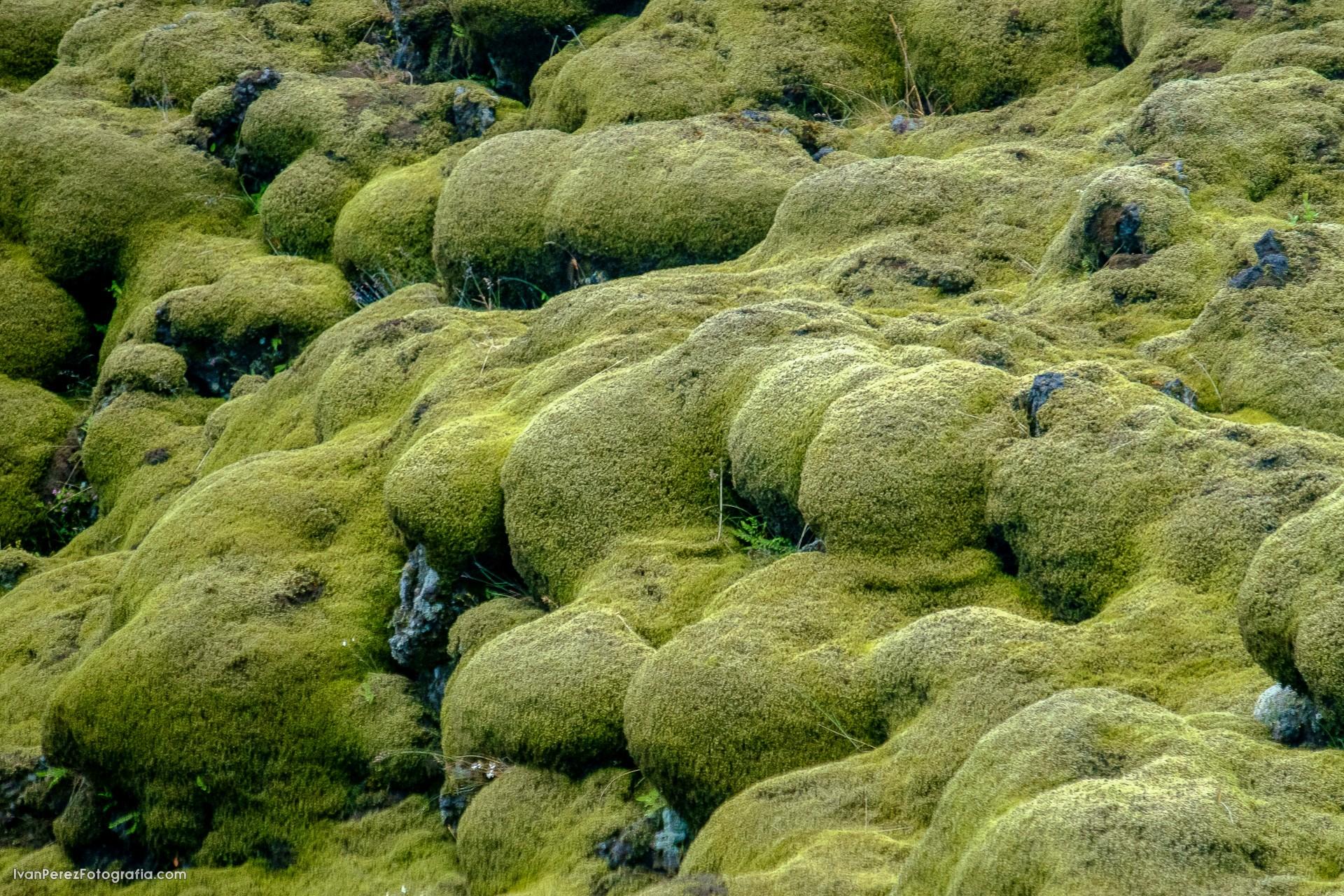 ISLANDIA SURESTE1